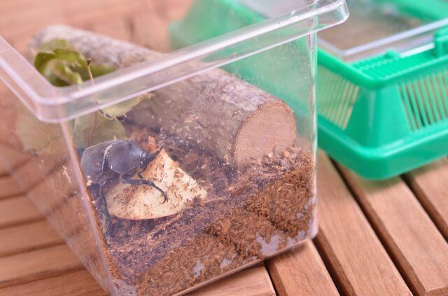 カブトムシの飼育ケース