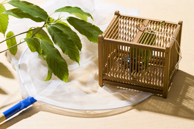 幼虫飼育に必要な道具